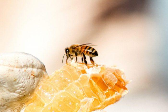 Piauí se torna o maior exportador de mel em 2021
