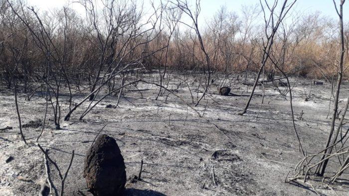 Piauí bate recorde com 481 queimadas em 24 horas, o maior número do Brasil